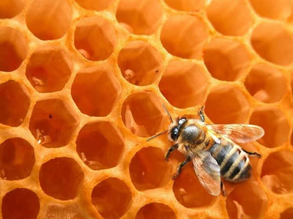 apiculteur 17120